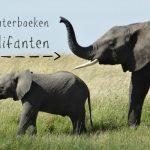 Stampend leuke peuterboeken over olifanten (2-4 jaar)