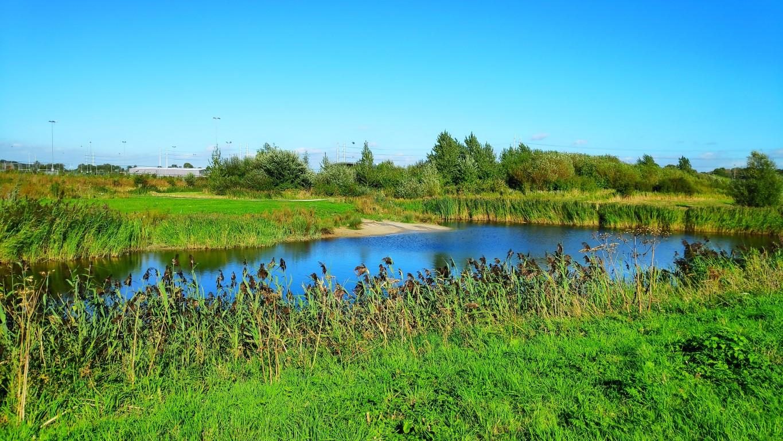 Bentwoud hondenstrandje, hondenspeelplekken in Zoetermeer